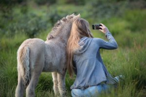 animal back view beautiful 736508 300x200 - Selfies Can't Replace the Portrait Art Traditions